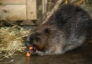 Zoodārzā pēc rekonstrukcijas atklāts dzīvnieku karantīnas bloks