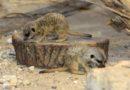 Mazuļu birums Zoodārzā (FOTO)