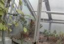 Kāds Dzirciema kūmiņš sarīko nekārtības Botāniskajā dārzā