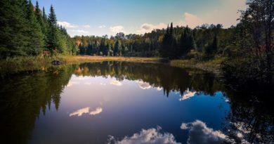 Saldūdeņu kvalitāte Latvijā strauji mazinās, izzūd arī reti un saudzējami ūdensaugi
