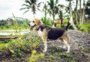 Aptauja: efektīvākā mājdzīvnieku uzraudzīšanas stratēģija – izsekošanas ierīces