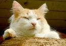 """Pārdaugavā ierīkos """"kaķu pilsētiņu"""""""