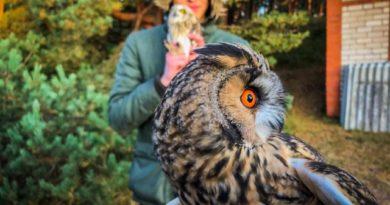 Nedēļas nogalē Eiropā novēroti vairāk nekā 4 miljoni putnu: Latvijā teju 50 tūkstoši