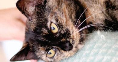 Dzīvnieku adopcija – iespēja samazināt bez saimnieka palikušo mājdzīvnieku skaitu