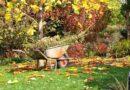 Košs dārzs pelēkā rudenī: kā dārzu kopt un rotāt gada tumšajos mēnešos