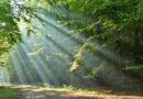 Līgatnes dabas takās iespējams izstaigāt Latvijas kontūru