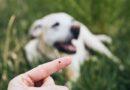 Ērču laiks: kas jāzina un jādara suņa saimniekam?